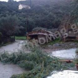 Προβλήματα από τους δυνατούς ανέμους στη Βελβίνα – Ευκάλυπτος έπεσε σε κεντρικό δρόμο [φωτο]